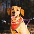 Cover pup Basil Myers-Prewitt. (Alex Wittwer)