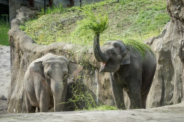 Rose-Tu and her four year old daughter, Lily, right, in Elephant Lands at the Oregon Zoo. © Oregon Zoo / photo by Kathy Street