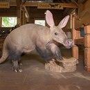 (courtesy of Oregon Zoo)