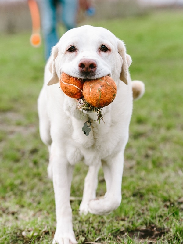 (The Ross Dog Park, Abby Gordon)