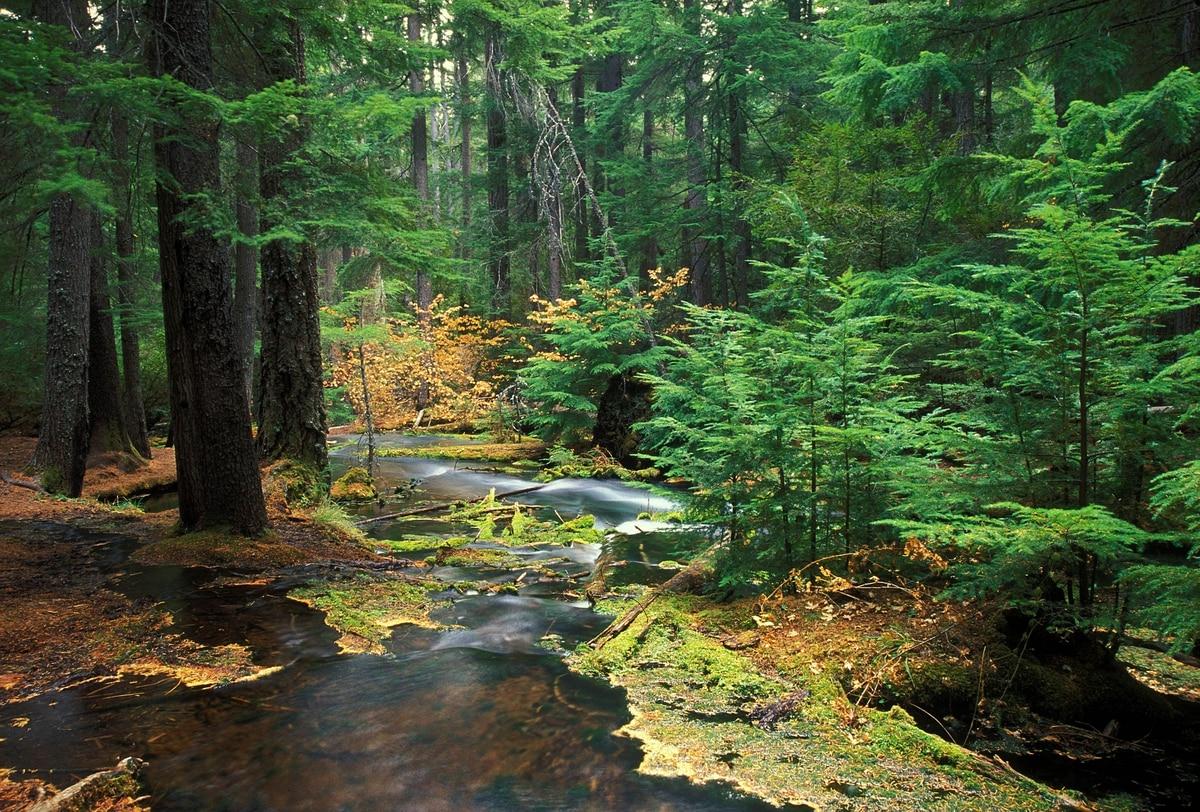 Oregonia  - cover