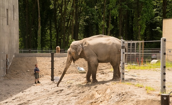 Packy (Michael Durham, courtesy of the Oregon Zoo)