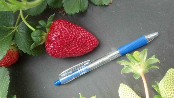 San Andreas strawberry