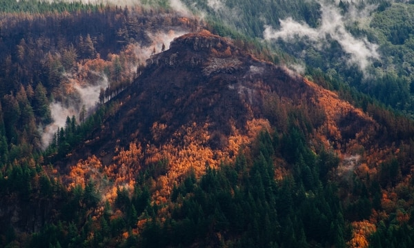 Eagle Creek fire, after rainfall. (Daniel Stindt)