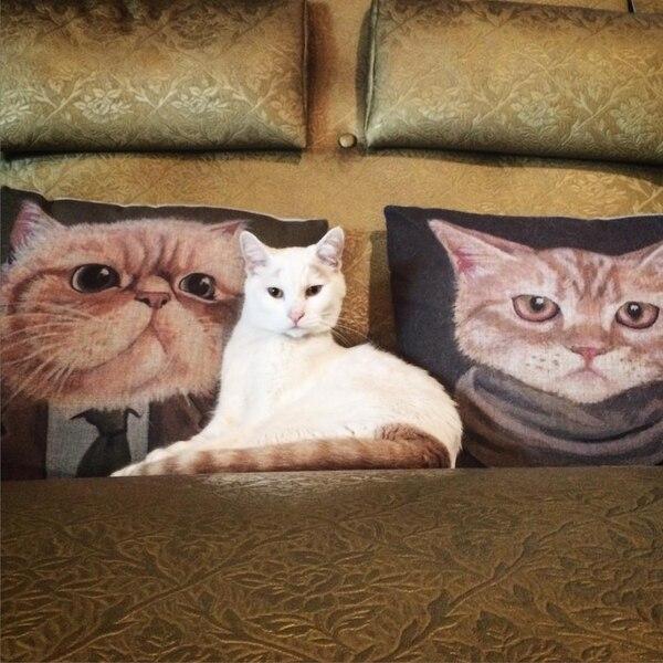Purrington's Cat Cafe