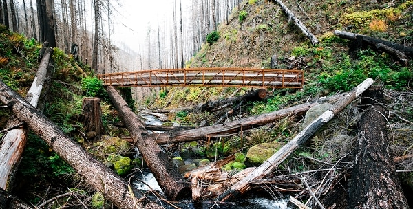 Trees that fell during the fire crisscross Multnomah Creek near a newly constructed footbridge on the Larch Mountain Trail. The footbridge was airlifted to the trail by helicopter last year. (Wesley LaPointe)