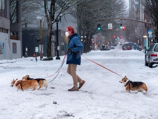 Corgi walking, downtown Portland. (Brian Burk)