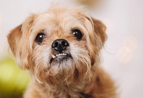 Wally, Susan Bragdon's other dog.