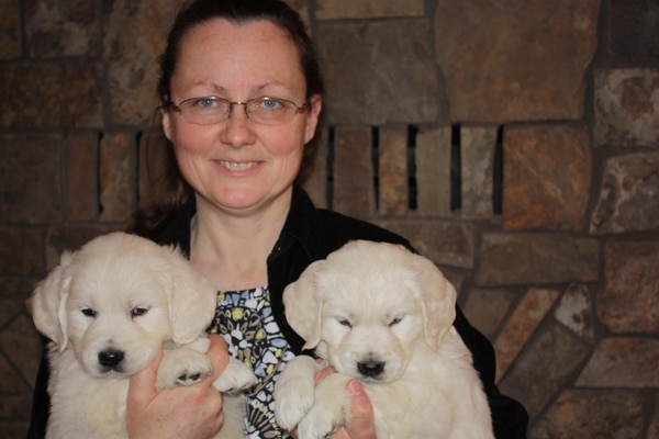 DOGS, GONE: Salem dog breeder Judy Lowery with her English cream golden retriever puppies. She charges $3,500 per pup.