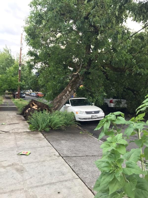Tornado damage in Northeast Portland. July 1, 2019. (Julie Showers)