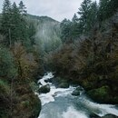 With nearly 10 feet of rain a year in some parts of the Elliott State Forest, you don't need to go far to find water. (Joe Riedl)