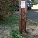 Free rosemary in a Northeast Portland neighborhood. (Trevor Gagnier)