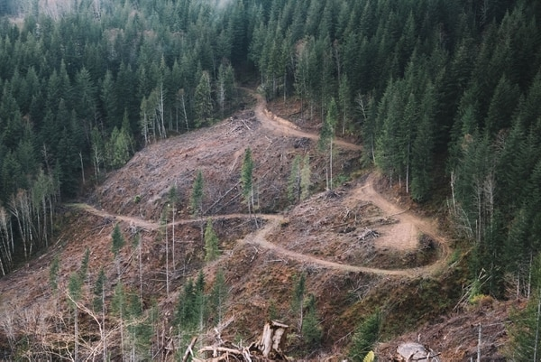 The state's newest clear-cut operation showed signs of conservation, with tree buffer zones on ridges that didn't carry water year-round. These and other conservation efforts aren't required by state law but are frequently made in the Elliott.