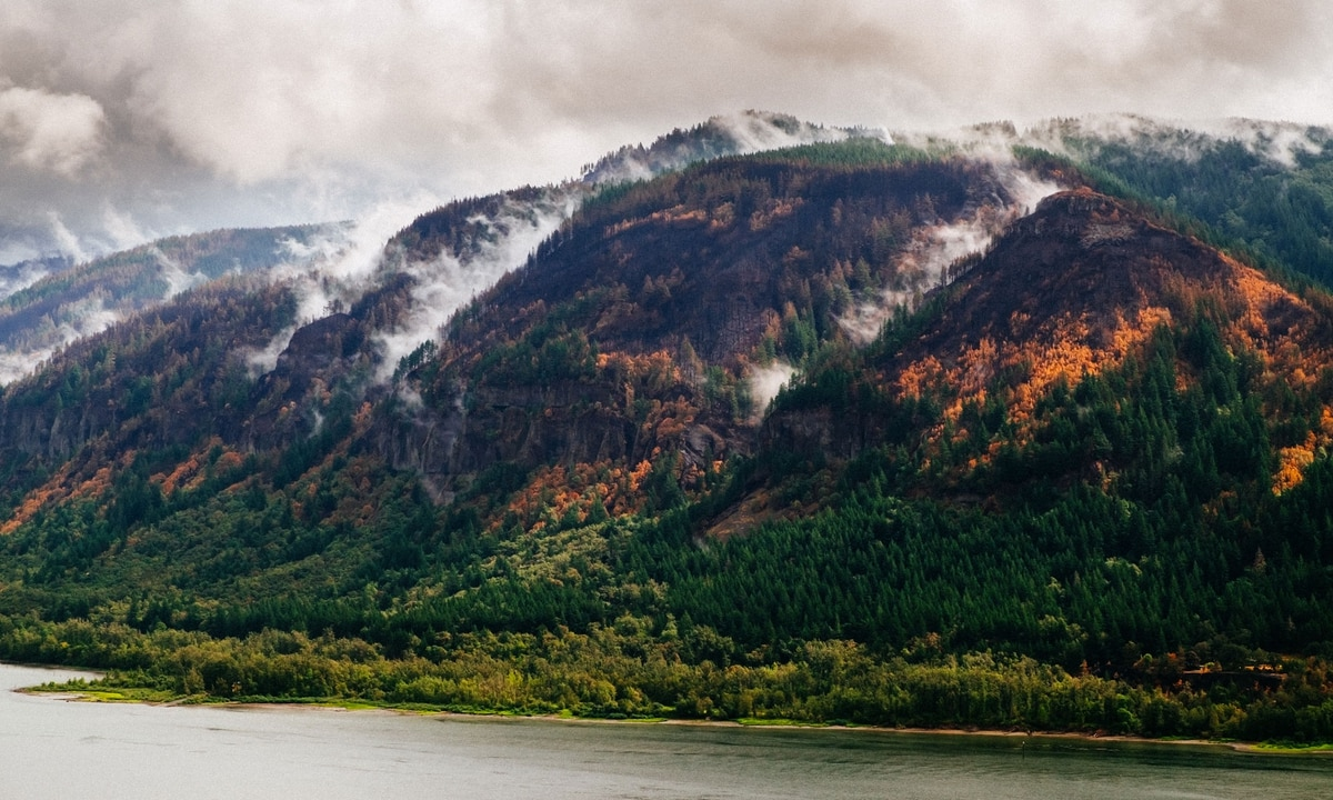 Friends of the Columbia River Gorge Protests Timber
