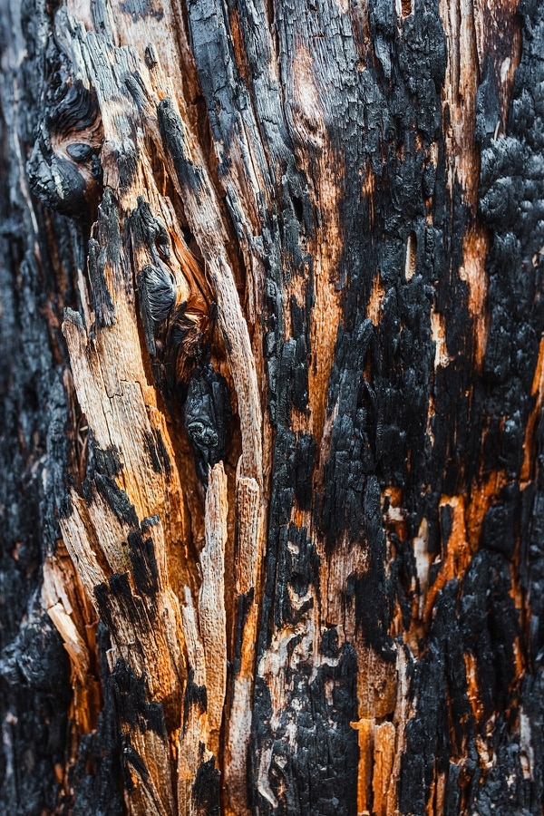The burnt texture of a tree on the Mount Defiance trail. (Wesley Lapointe)