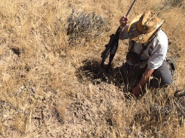 Frontier Unlimited's Gary Lewis, inspecting year-old damage most likely the result of feral pigs
