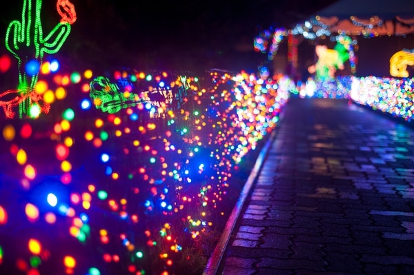 Zoo Lights by Todd Kulesza / Flickr