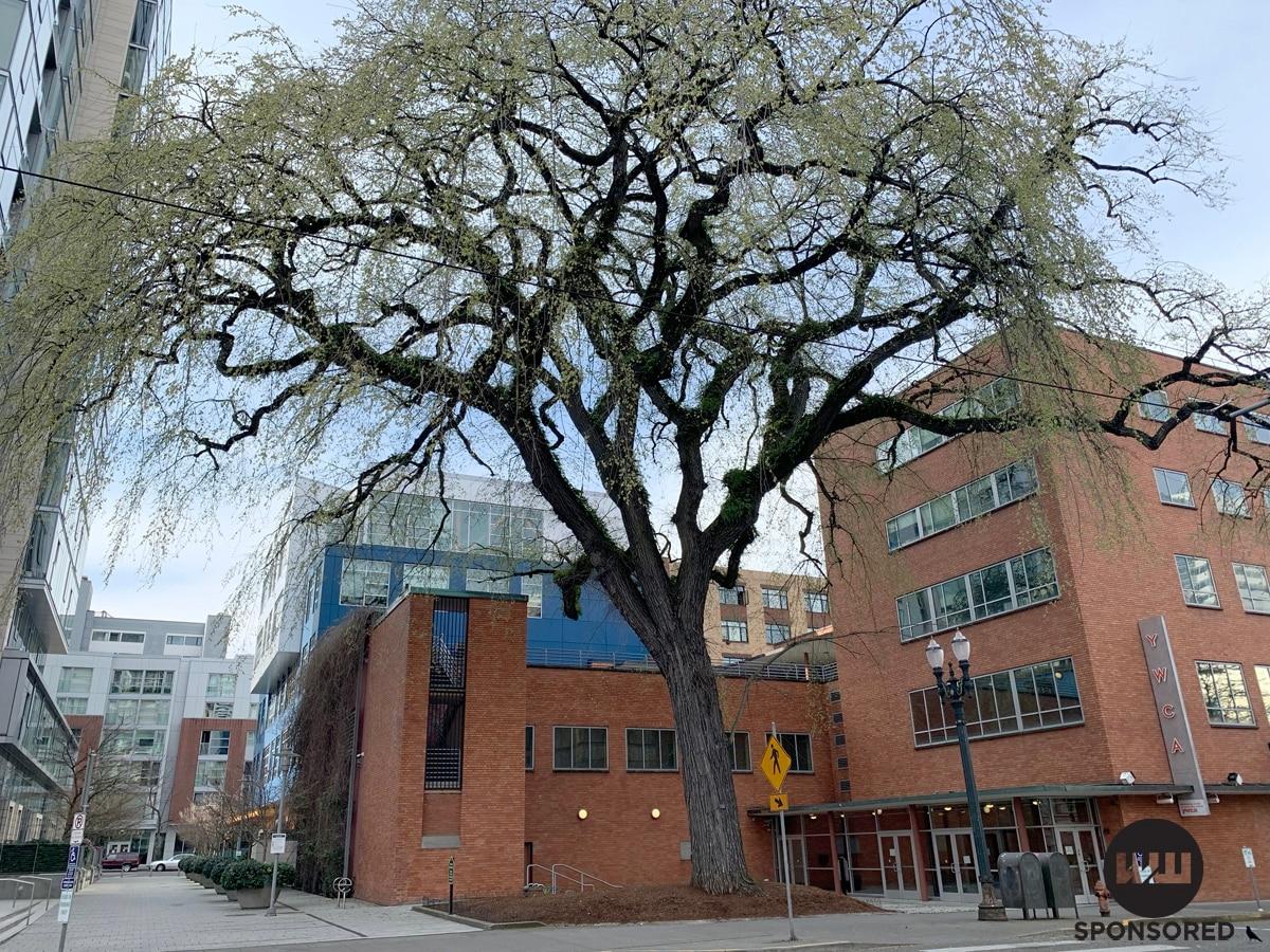 Our Five Favorite Trees In Portland Willamette Week