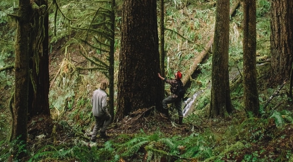 Metzler peered up at a Douglas fir, estimating it to be nearly 300 years old. This pocket of the forest, the Silver Grove, has remained untouched by loggers and fire for centuries.