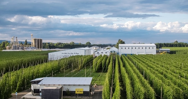 HOP ALONG: TopWire Hop Project is nestled among crops at Crosby Hop Farm.